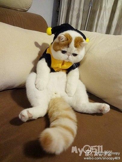 Самый милый кот на свете 1bCQM1_zT5U