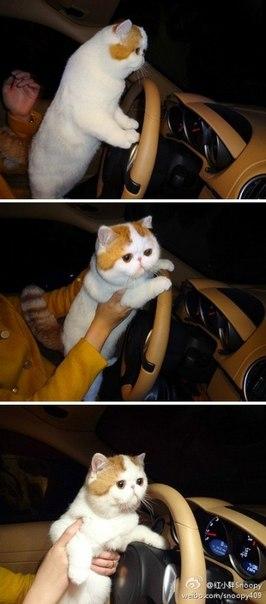 Самый милый кот на свете - Страница 2 _lAYY16Urqk