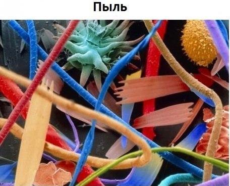 Немного интересного под микроскопом KuPnf_TmVeg