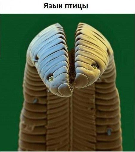 Немного интересного под микроскопом 7dUdmorhfvk