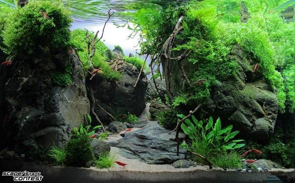 Конкурс аквариумного дизайна DENNERLE Scaper's Tank 2014 ITEUNyFsCHU