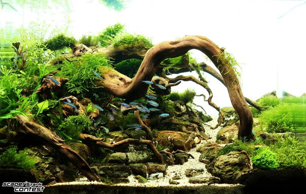 Конкурс аквариумного дизайна DENNERLE Scaper's Tank 2014 EhXCmszGN8g