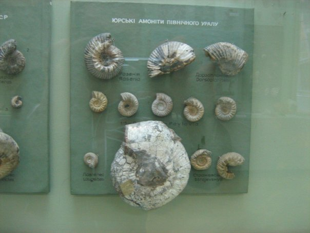 Мои путешествия. Елена Руденко. Киев (Научно-природоведческий музей.  ). 2009г. X_d64effe4