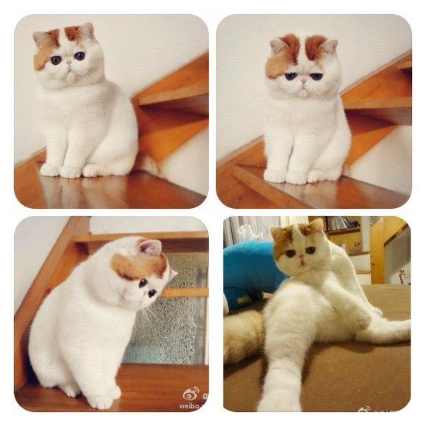 Самый милый кот на свете - Страница 2 S8Qmgs1HnZA