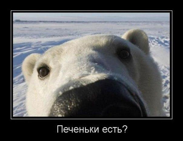 Ничто человеческое медведям не чуждо NWctwNb0V24