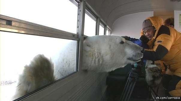 Ничто человеческое медведям не чуждо V0Ucl6lp3Gw