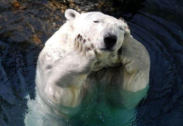 Ничто человеческое медведям не чуждо JdpxqLJoUfg