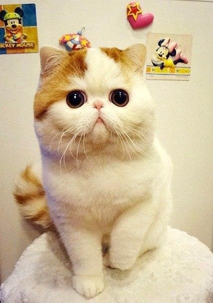 Самый милый кот на свете YT5AoqugPfs