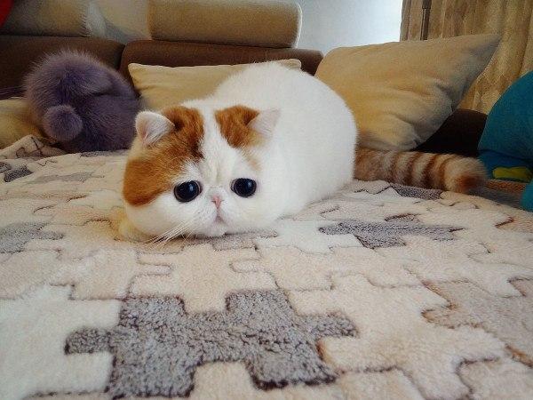 Самый милый кот на свете - Страница 2 Yi0b6K8BhRY