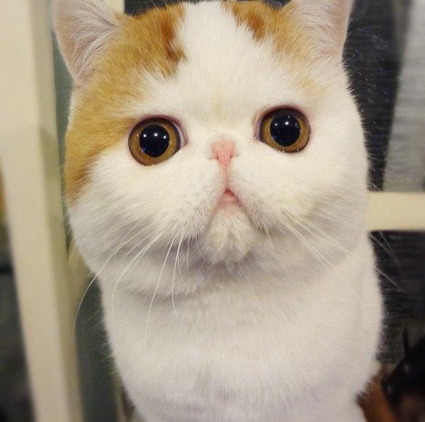 Самый милый кот на свете - Страница 2 IuAjygmM398