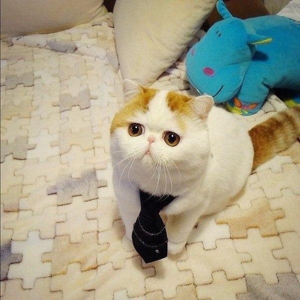 Самый милый кот на свете 74hJpLk8mU4