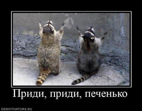 Забавные животные и птицы. - Страница 4 X_ec0020b9