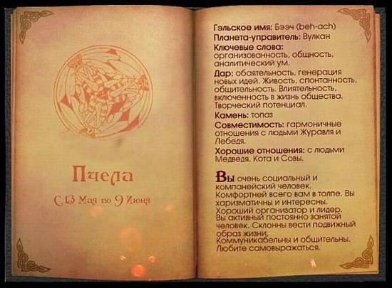 Кельтский гороскоп.. X_0808a677