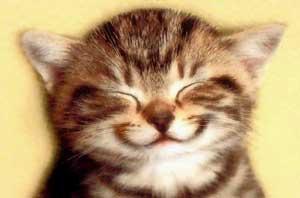 truyen cười ( nhìu tập ) park 2 - Page 6 Funcat