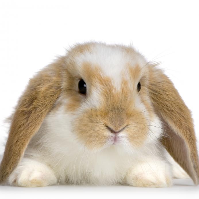 Najslađe životinje na svijetu Bunny