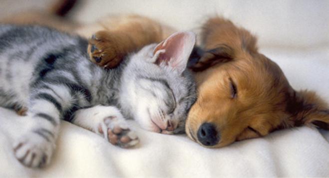 Pusti me da  spavam... Rcp101-kitten-puppy