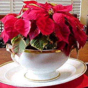 Sobne biljke Posuda-za-sobne-biljke1