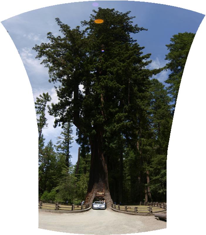 Séquoia Géant Big-tree-small