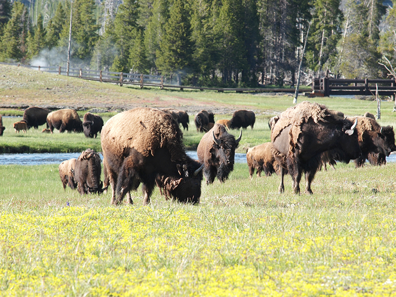 [USA - 3] Cross Country - Yellowstone 20120611_2053
