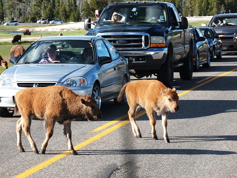 [USA - 3] Cross Country - Yellowstone 20120611_2063