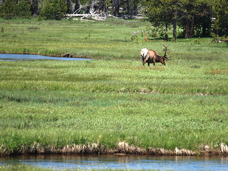 [USA - 3] Cross Country - Yellowstone 20120612_2188