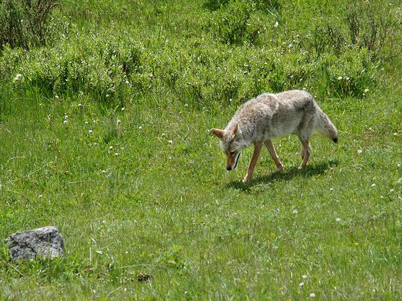 [USA - 3] Cross Country - Yellowstone 20120612_2357