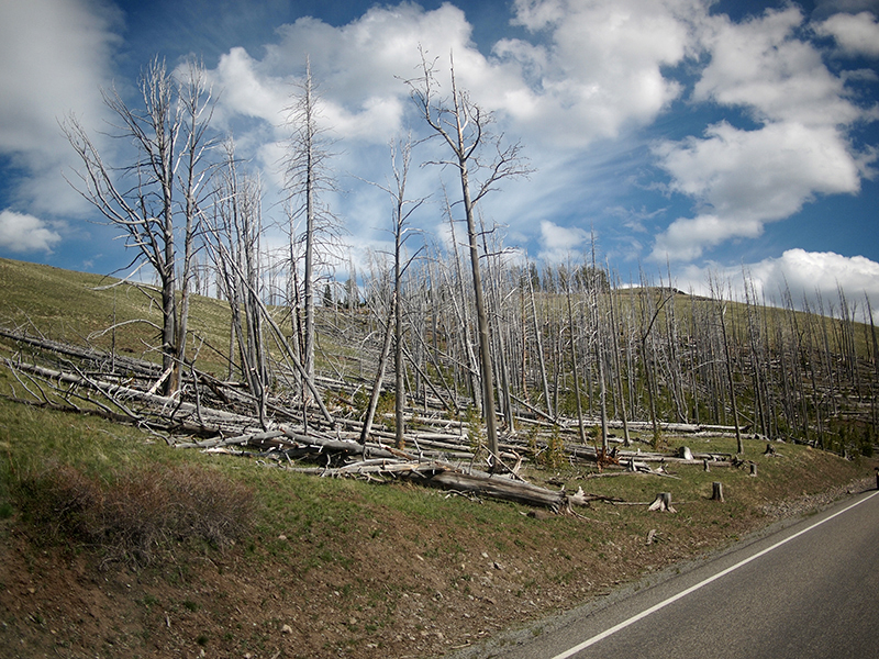 [USA - 3] Cross Country - Yellowstone 20120612_2404