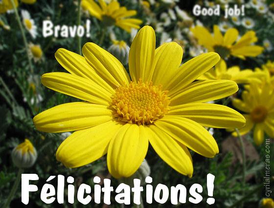 2010.....Le bilan !!! Carte_Felicitations