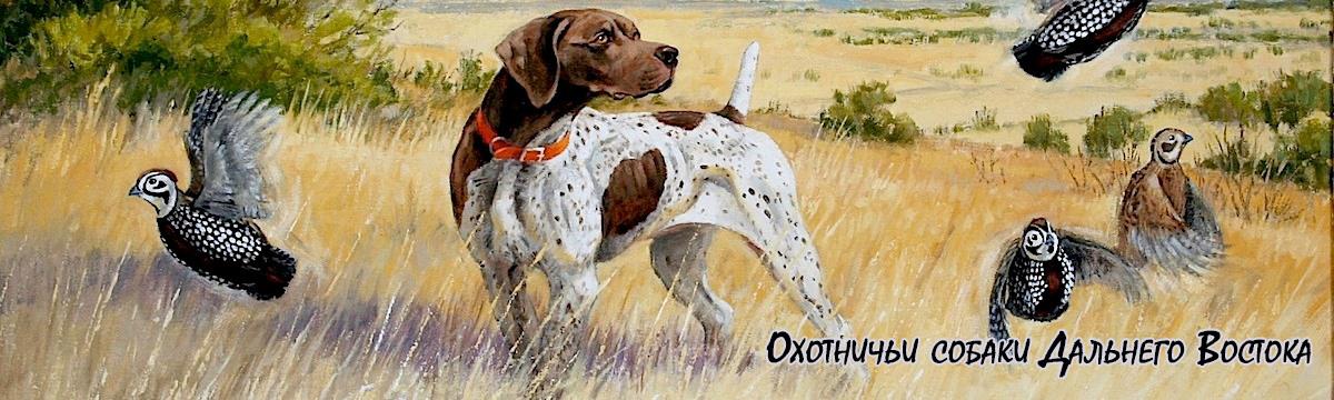 Охотничьи собаки Дальнего Востока