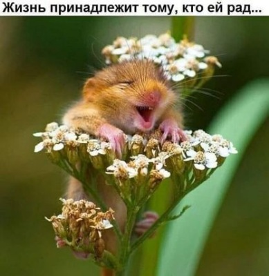 Утреннее настроение - 2 - Страница 40 1474819eaeb8