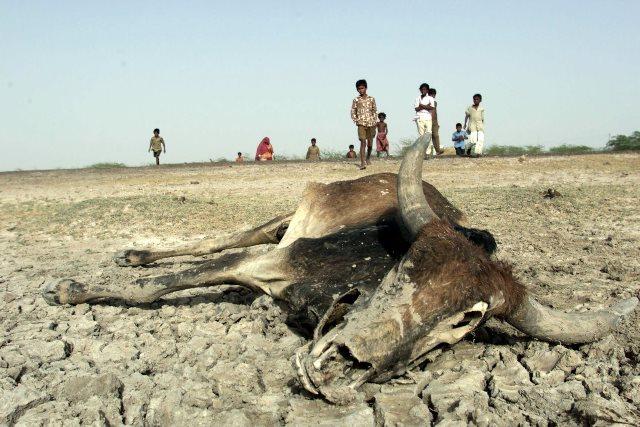Día Internacional de la Tierra: imágenes para reflexionar C04e940a-fe13-4938-81c4-3381aca6c02d_879_586