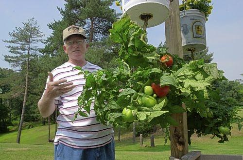 Технология выращивания помидоров (томатов) вниз головой (сверху вниз).