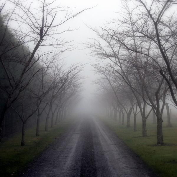 Kroz maglu...  Mist8