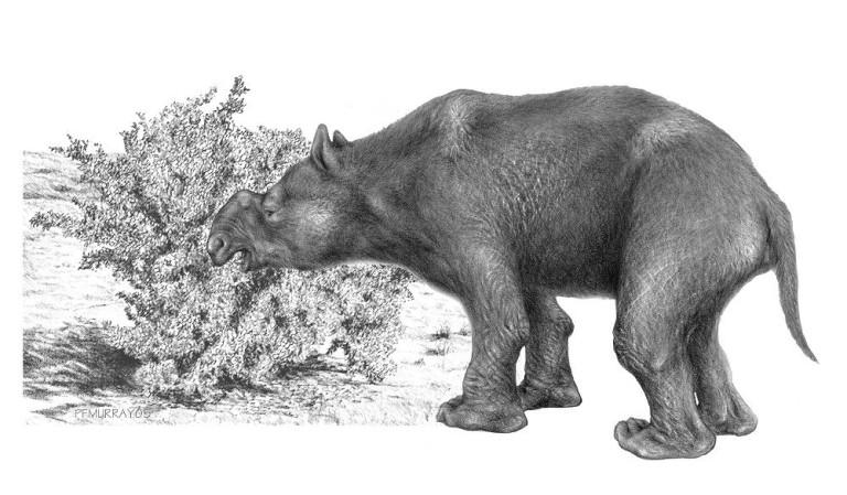Ce promeneur découvre un camp aborigène vieux de 49 000 ans… lors de sa pause pipi ! Par Corentine Sys                      Diprotodon-768x449