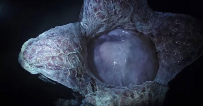 3 raisons d'aller voir Alien : Covenant ! Par Justine Manchuelle Alien-covenant-une-768x403