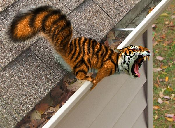 Hawken investarm Tiger-squirrel