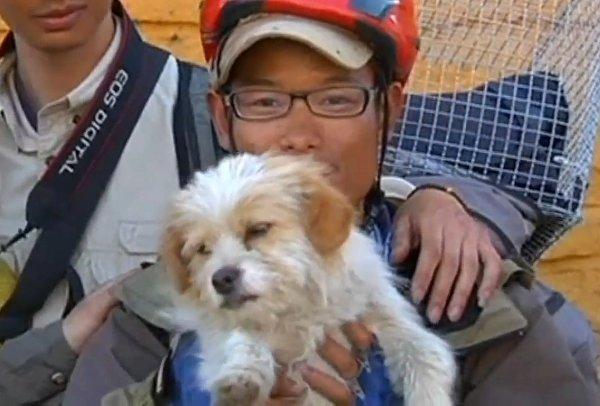 Quelles sont vos meilleures vidéos montrant l'intelligence et la sensibilité animal Stray-Dog-Completes-1700-Km-Race-In-China