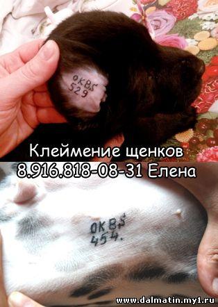 Клеймение щенков с выездом на дом (Москва) IMG_0089