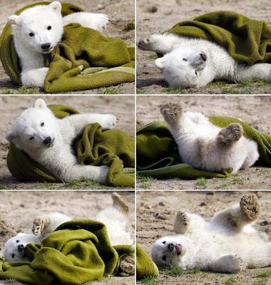 Les ours 638409231