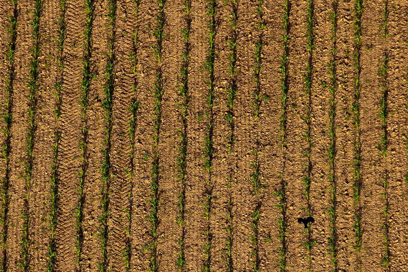 Vol en montgolfière (G.D. Luxembourg) - 20 juin 2009 - Les photos DSC03823