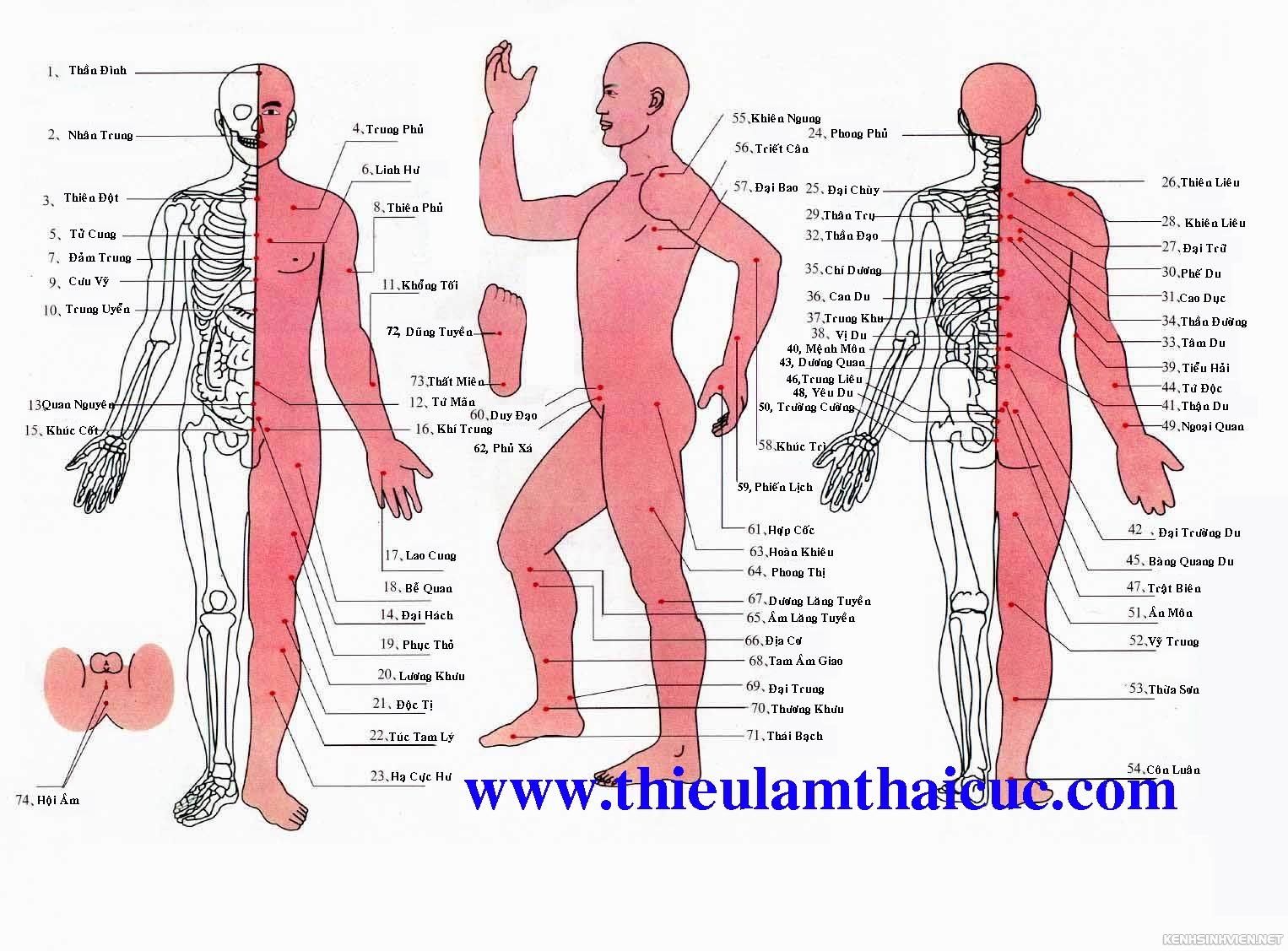 Sơ lược về các Huyệt đạo trên cơ thể người. Sodohuyetvi2luucopy