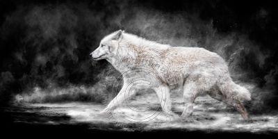 Bestiaire du forum Art-Digital-Alain-Thimmesch-Loup-32_217-400x200