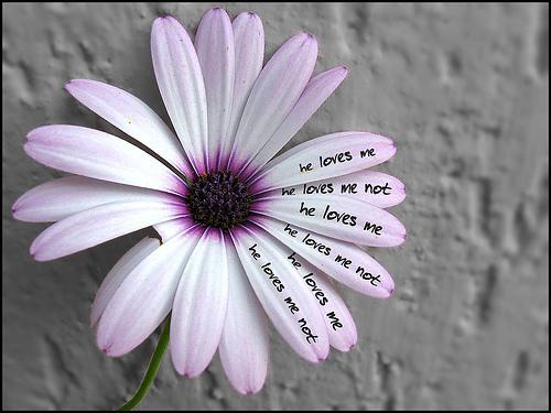 Poruči mi stihom, hoću da te osetim romantikom  - Page 2 M-ama-non-m-ama_large