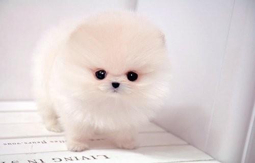 The Shape Of My Heart - Página 10 Beautiful-cute-dog-Favim.com-271836_large