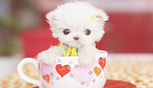 Animale... - Page 5 Cupe-cute-dog-white-Favim.com-298690_large