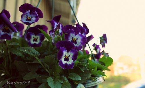 ~Floriiii~ - Page 8 3004_082_large