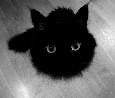 Lo que todo gato quiere  (Harry styles y tu) TERMINADA Tumblr_md1i67E6991r4fdrlo1_400_large