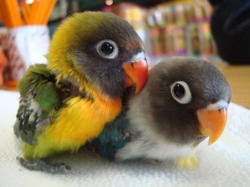 Foto nga bota e kafsheve dhe zogjve  - Faqe 4 544468_328886840565194_615580147_n_large