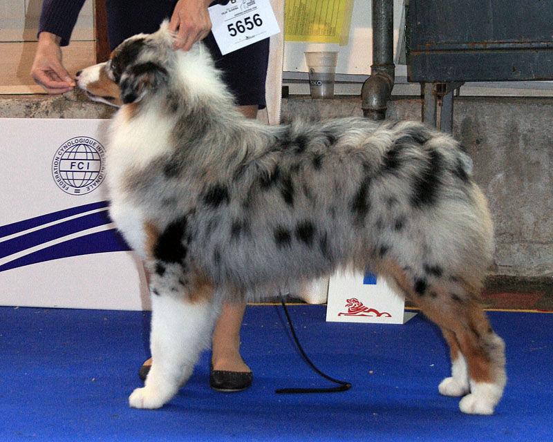 Crufts Dog Show - Страница 2 130053--36677613-src