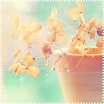 Аватары с цветами 231749--45927599-200-ud9e5d